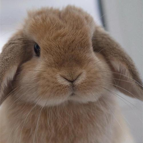 可可爱爱兔兔